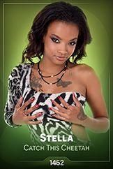 Stella / Catch This Cheetah